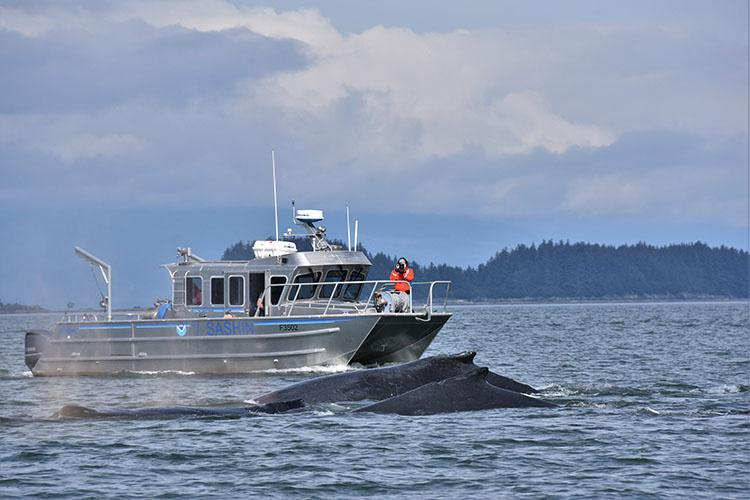 Scientists observing humpback whales from a research vessel in Alaskan waters.