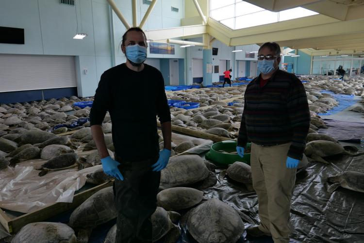 Two men stand with masks and gloves in front of dozens of green sea turtles inside of a convention center.