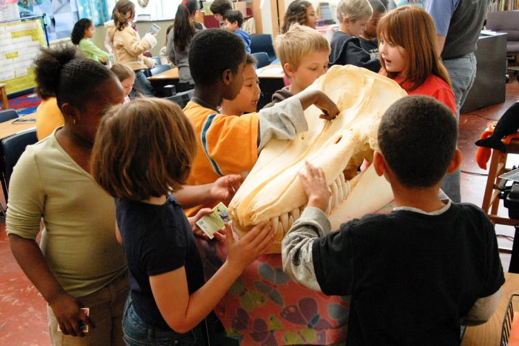 Kids examining a killer whale skull in a classroom