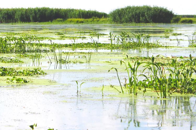 Landscape of healthy coastal Louisiana wetlands.