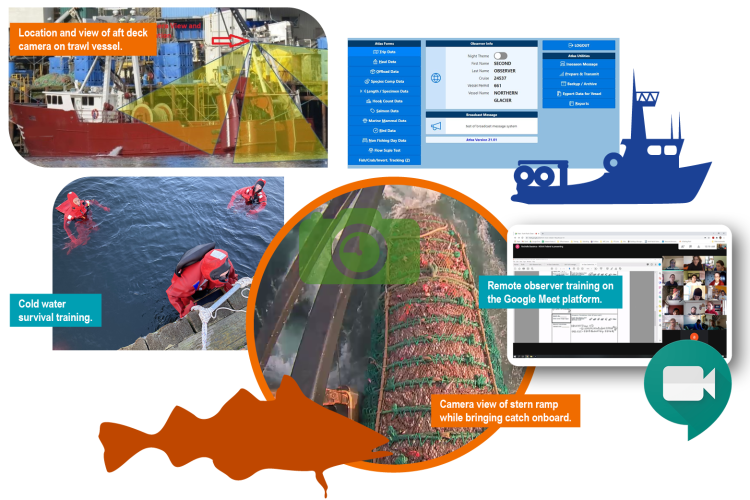 Collage of species, training, and observing activity images conducted by the Alaska Fisheries Science Center's Fisheries Monitoring and Analysis division.