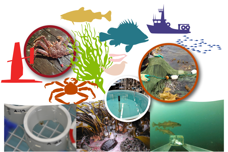 Collage of species and research activity images conducted by the Alaska Fisheries Science Center's Kodiak Laboratory.