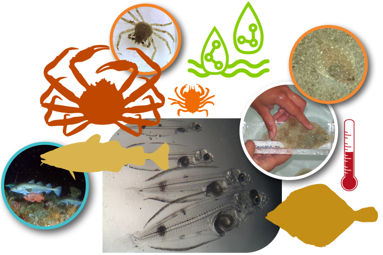 Collage of species and research activity images conducted by the Alaska Fisheries Science Center's Newport Laboratory.