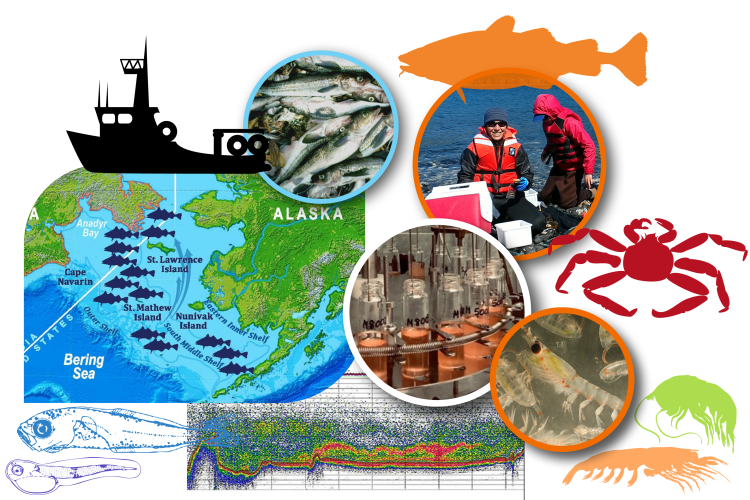 Collage of species and research activity images conducted by the Alaska Fisheries Science Center's Resource Assessment and Conservation Engineering division.