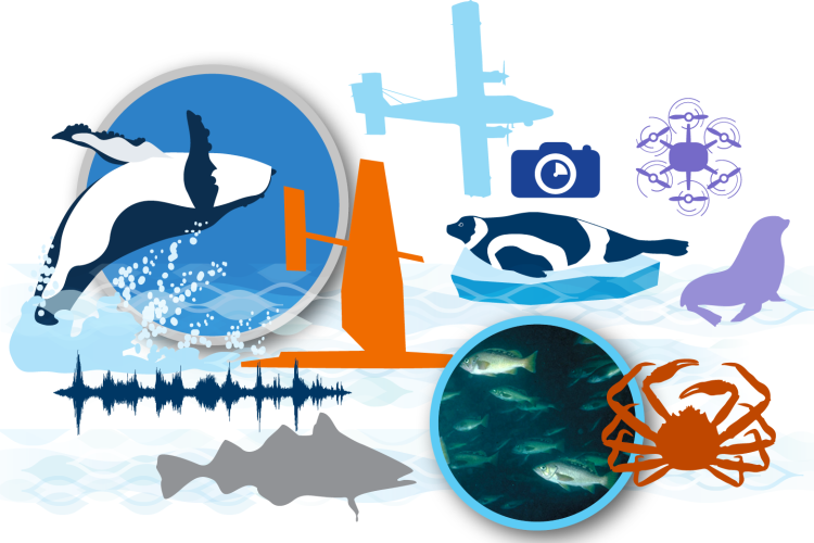 Collage image of sail drone, aerial drone, aircraft and various Alaska marine species.