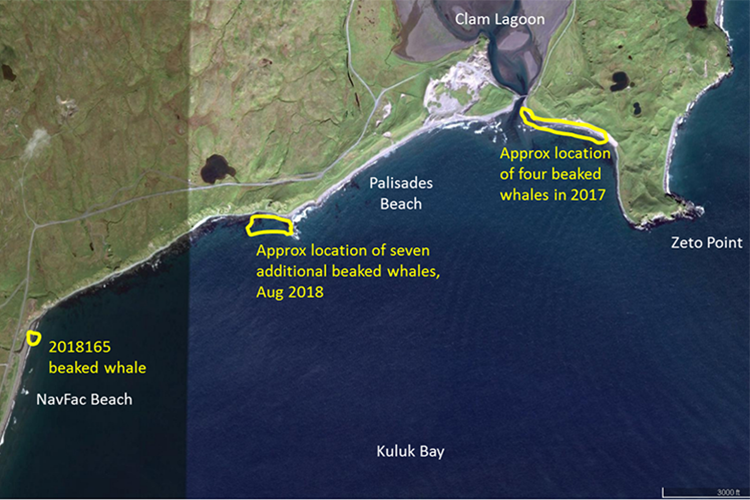 Satellite image showing the location of the eight Stejneger's beaked whales necropsied in August 2018, and the approximate location of the four Stejneger's beaked whales that stranded in July 2017 on Adak Island, Alaska.
