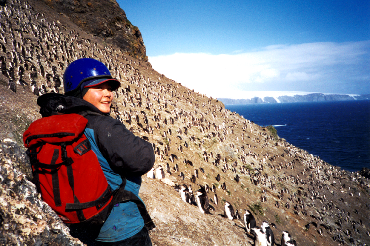 Photo of Lisa Hiruki-Raring on a steep slope, above the ocean, viewing chinstrap penguins.