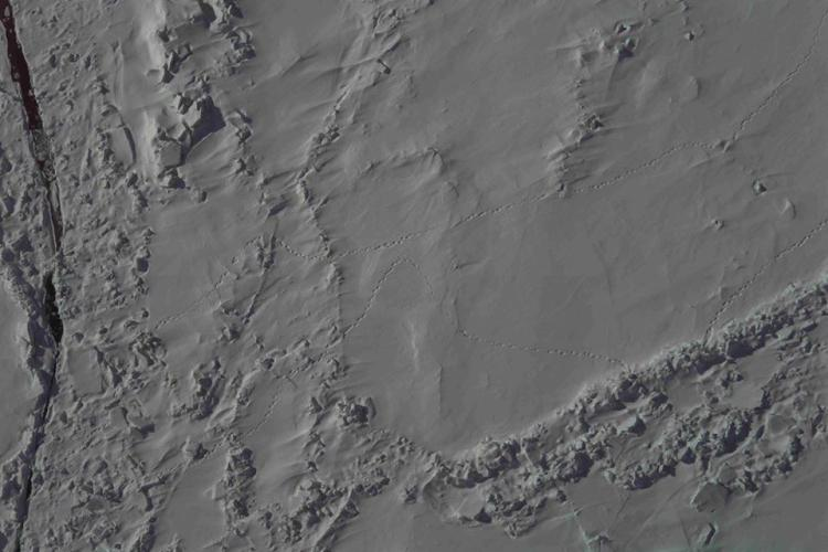Aerial photo of polar bear tracks in snow on ice floes.