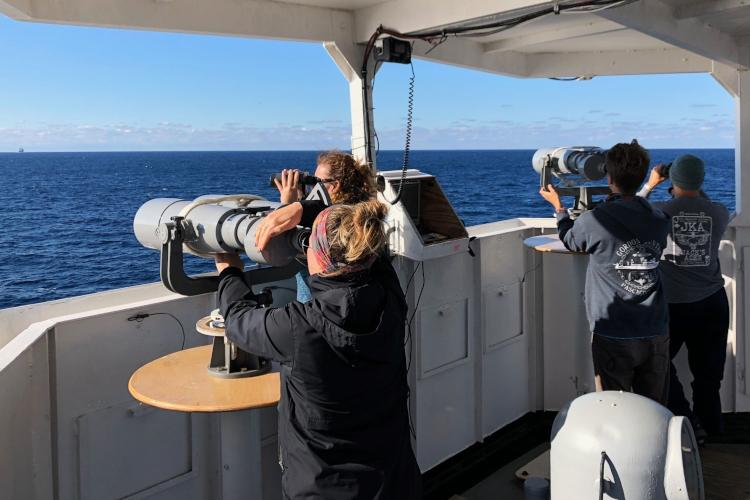 Observers on the fly bridge of a ship scanning the surface of the water for marine mammals.