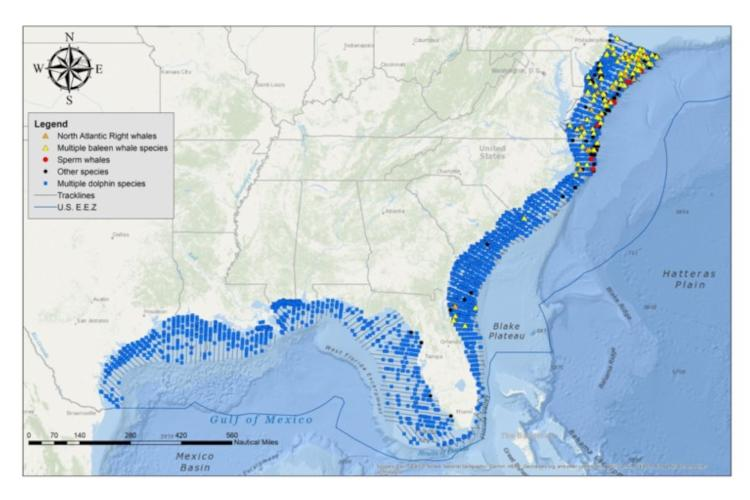 Track lines and marine mammal sightings from aerial surveys between 2010 and 2019.