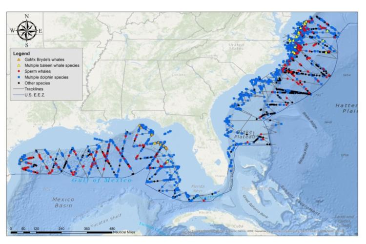 Track lines and marine mammal sightings between 2011 and 2018.