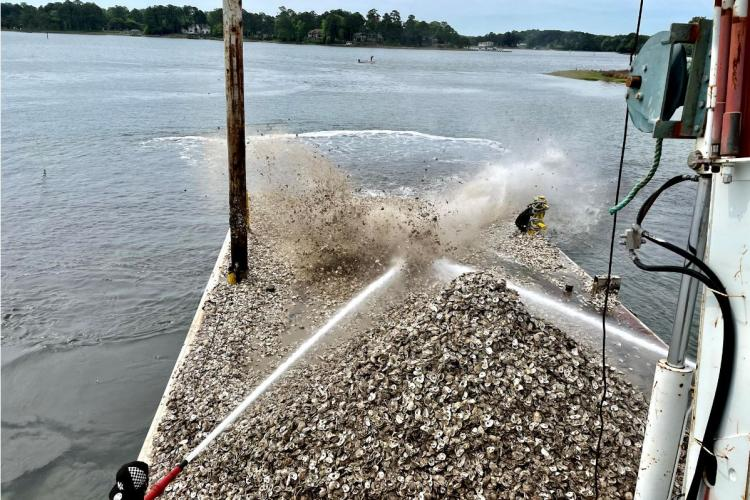 Water cannons send a 2,000 bushel barge load of recycled oyster shell into the Lynnhaven River as part of the oyster reef construction.