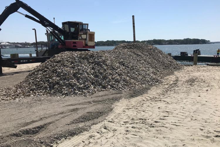 A large pile of oyster shells on a dock ready to be loaded onto a barge for restoration work