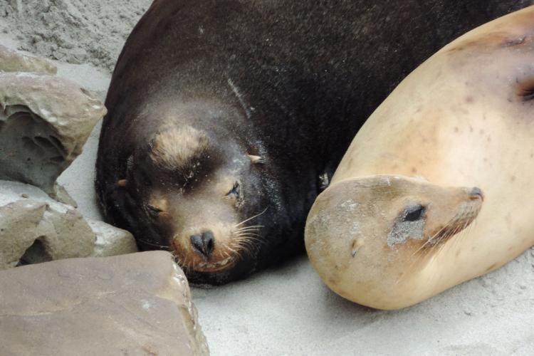 Sea lions resting on a beach