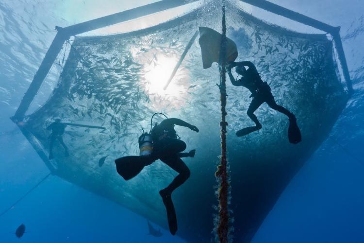750x500-hawaiian-net-pen-Blue-Ocean-Mariculture.jpg