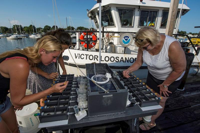 Three women taking samples of mussels held in a specialized metal rack used for in-water experiments