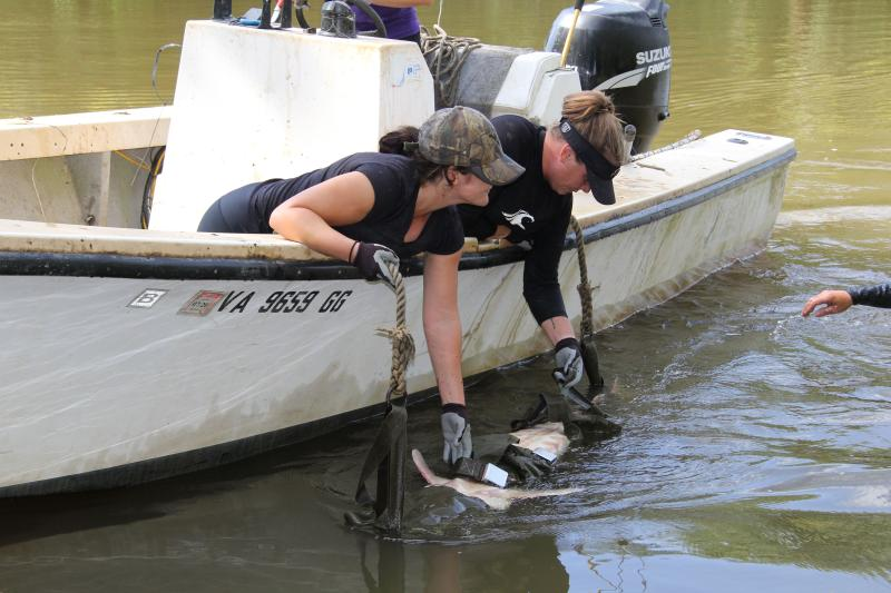 Tribal citizens help with Atlantic sturgeon research