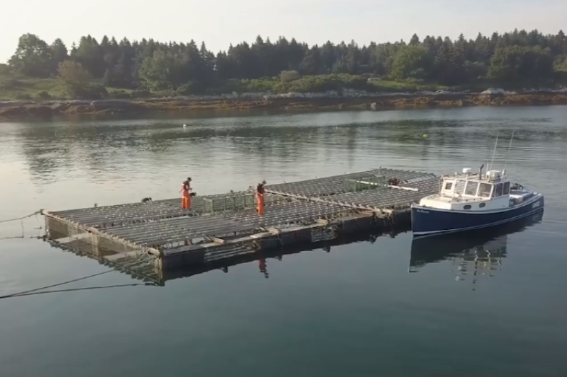 people walking on aquactulture cages in open water near coastline