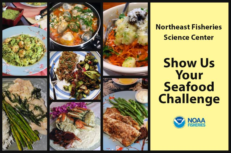 Graphic of seven winning dishes in the NEFSC Show Us Your Seafood Challenge