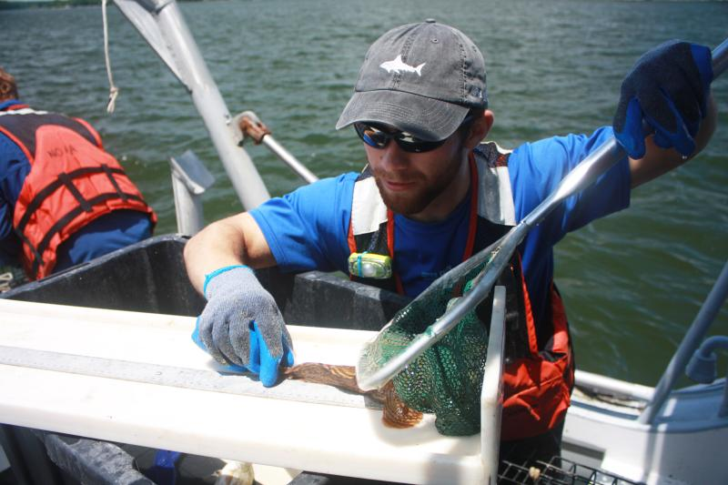 An intern measures a fish while on board a research vessel.