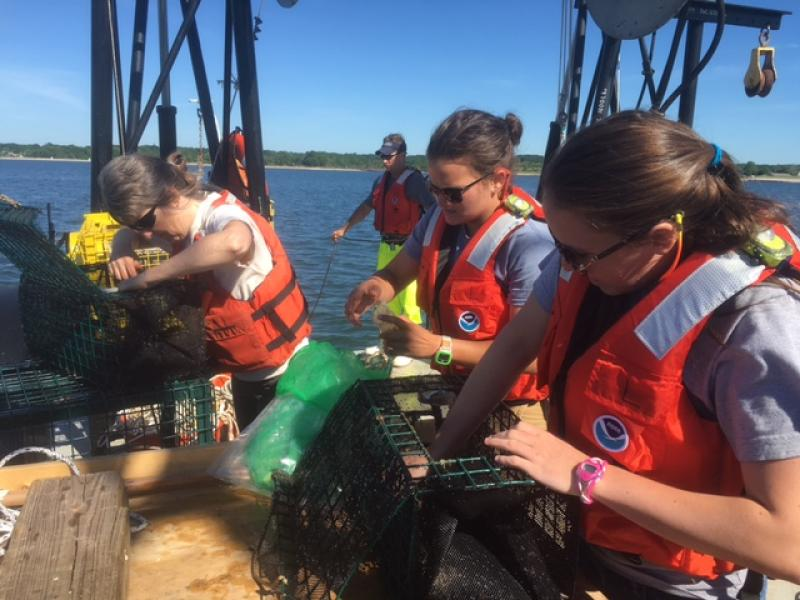 Three female scientists check metal fish traps for fish during field work on a boat in Long Island Sound.