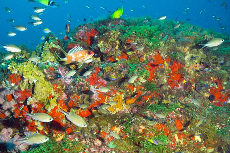 A colorful coral community in Flower Garden Banks National Marine Sanctuary. Image: NOAA/University of North Carolina Wilmington