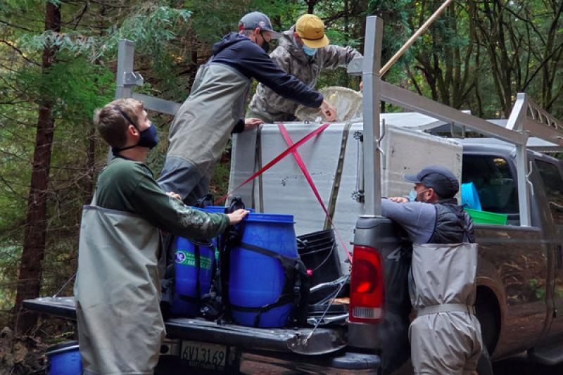 People removing juvenile Chinook from a tank in the back of a pickup truck
