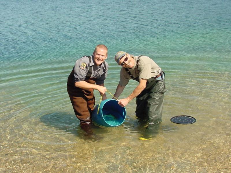 NWFSC scientist on left releasing a mature captive sockeye into Redfish Lake for volitional spawning. Pictured with Jeff Heindel (left), an Idaho Department of Fish and Game employee.