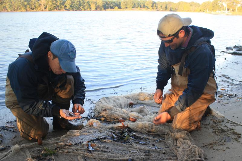 Two scientists explore the contents of a net on the shoreline of a river, picking fish out from among leaves