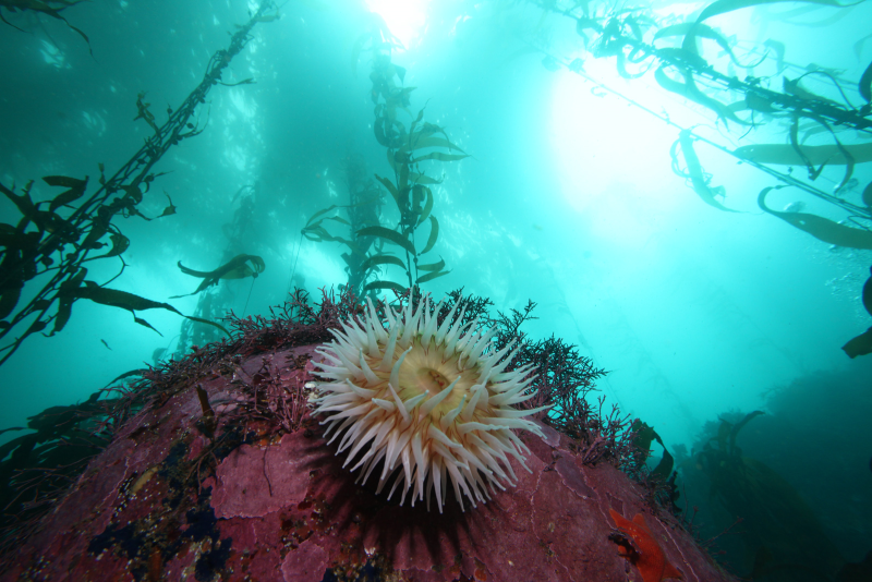 Kelp ecosystem