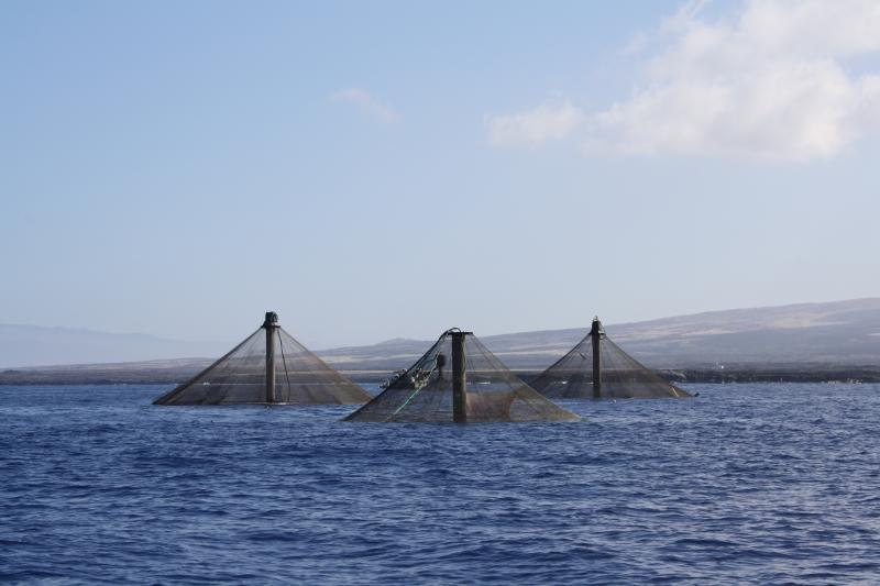 A view of three net pens poking through the water's surface, with land in the background.
