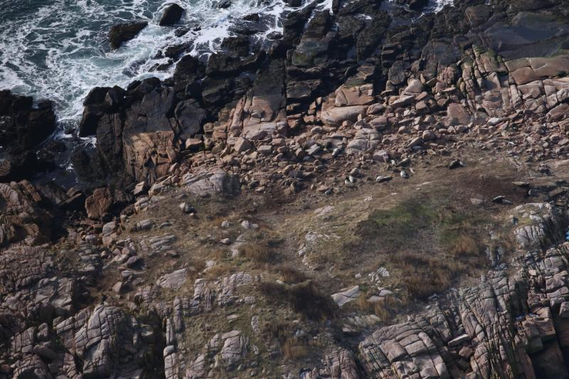 Young seals and their mothers napping among the rocks on a remote island off the U.S. State of Maine.