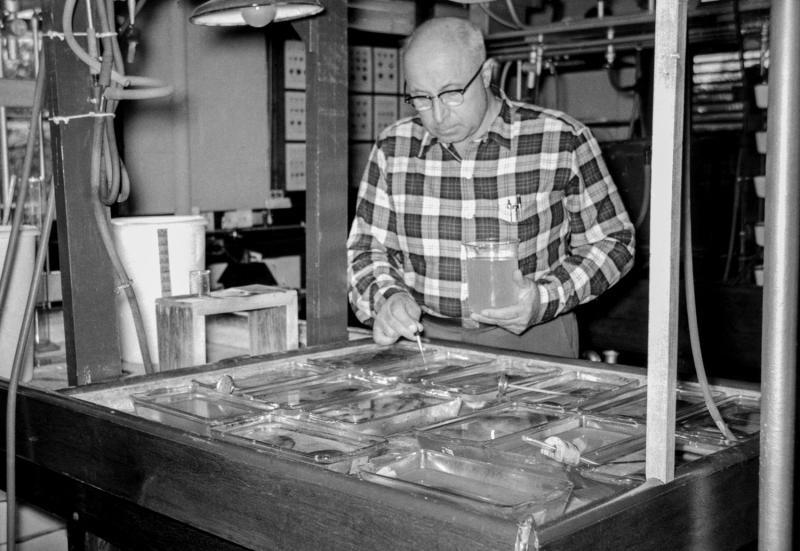 Victor Loosanoff working in the lab. Photo: NOAA Fisheries