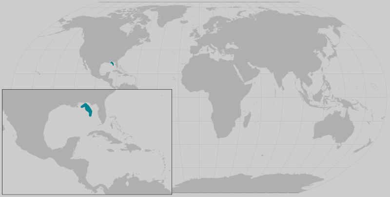 Gom Bryde's whale map