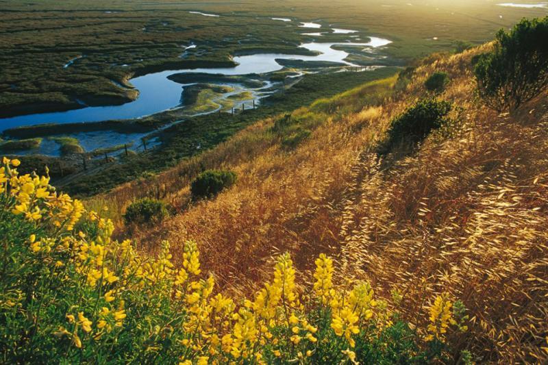 Elkhorn Slough wetlands