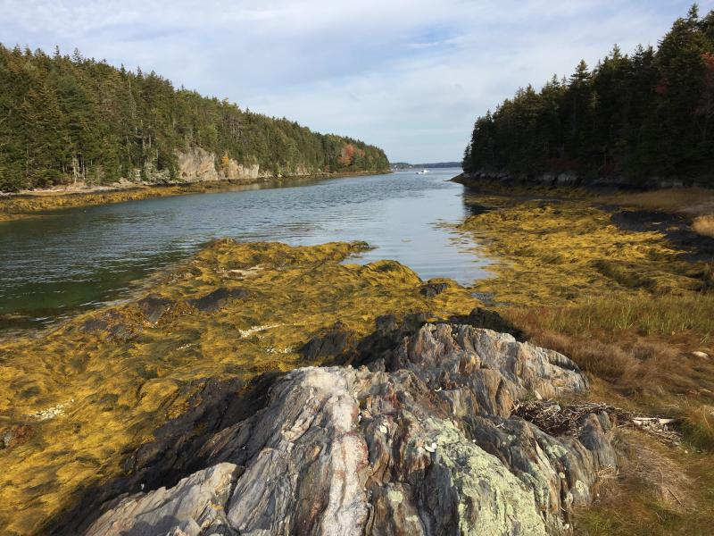 Salt Marsh and Coastal Rocky Island, Malaga Island, Maine