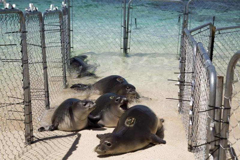 Monk seal feature image