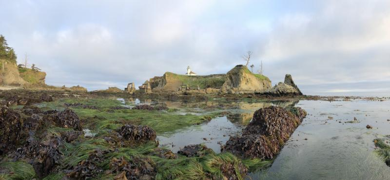 Low tide shows rocks, grasses, and other marine life near a lighthouse on the shores of Oregon.