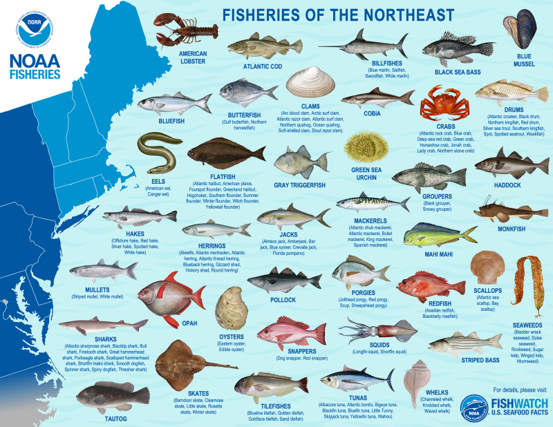 Fisheries of the Northeast map and species images.