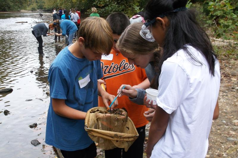 Four students examine items caught in a net as part of a stream exploration lesson