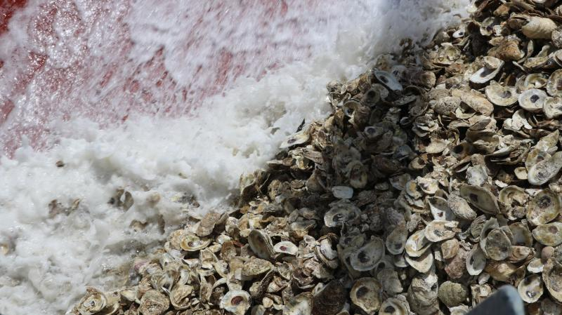 Water washes oyster shells across the deck of a barge.