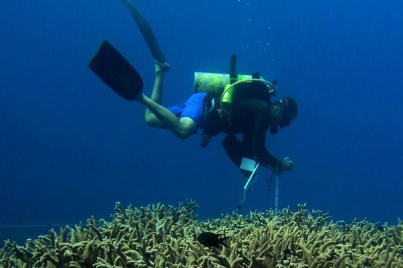 A scientist takes photos of the corals growing on this vibrant reef to help assess reef health.