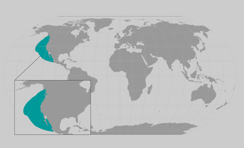 World map providing approximate representation of the Guadalupe Fur Seal range.