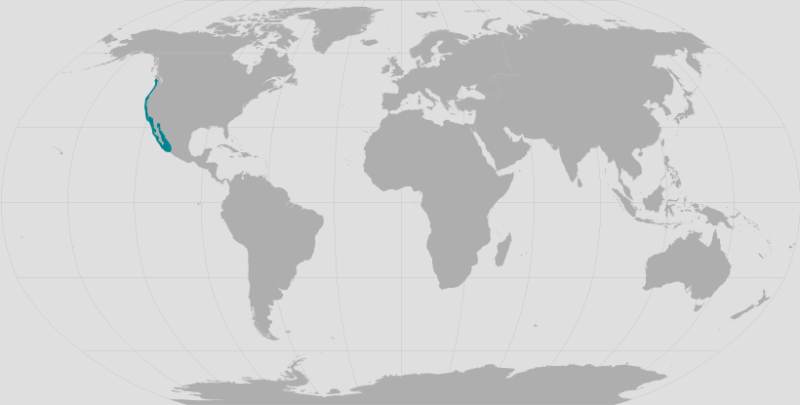 World map providing approximate representation of the California sea lion's range