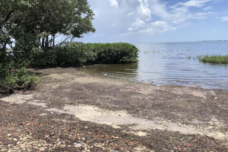 Fish killed by red tide along Florida Gulf coast.