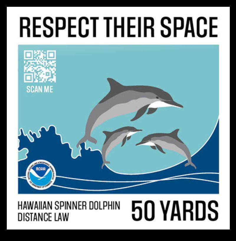 Spinner dolphin illustration.