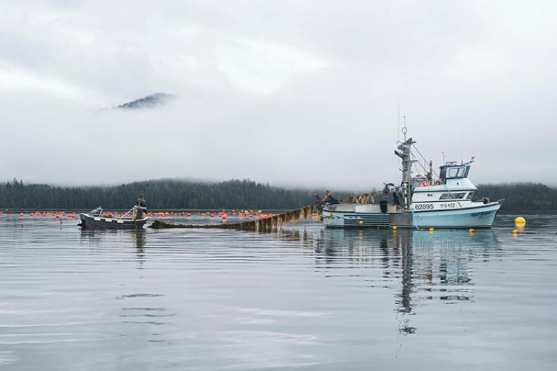 Harvesting Kelp in Alaska. Credit: Seagrove Kelp Co.