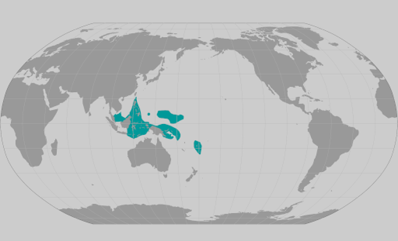 Acropora lokani coral range map