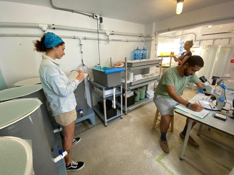Three queen conch researchers working inside the Naguabo Queen Conch Hatchery in Puerto Rico