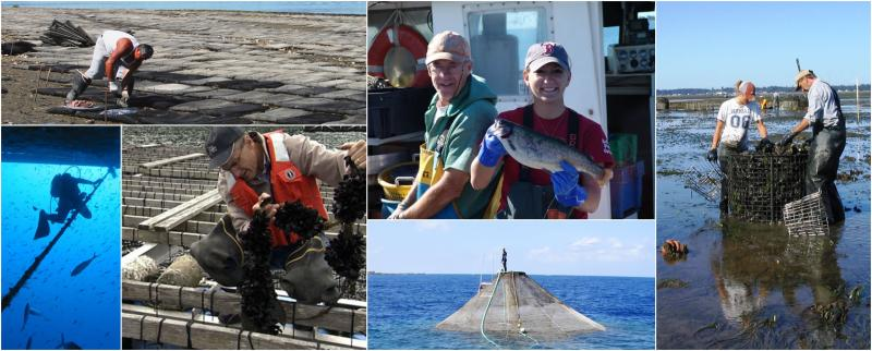 A collage showing photos of seaweed, finfish, and shellfish aquaculture.